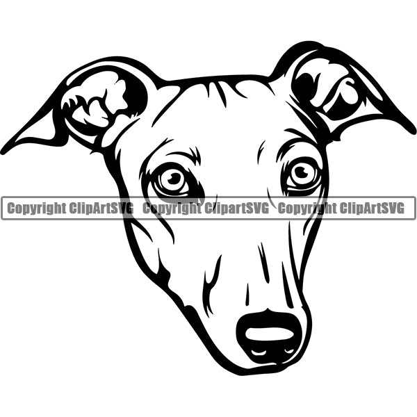 Greyhound Dog Breed Head Face ClipArt SVG 001
