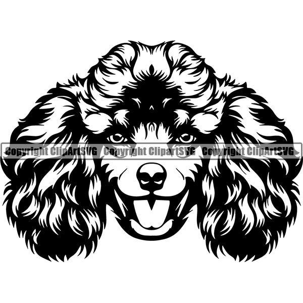 Poodle Dog Breed Head Face ClipArt SVG 003
