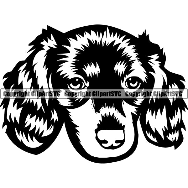 Animal Dog Dachshund Dog Breed Head Face ClipArt SVG 003