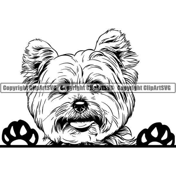 Yorkshire Terrier Peeking Dog Breed ClipArt SVG 006