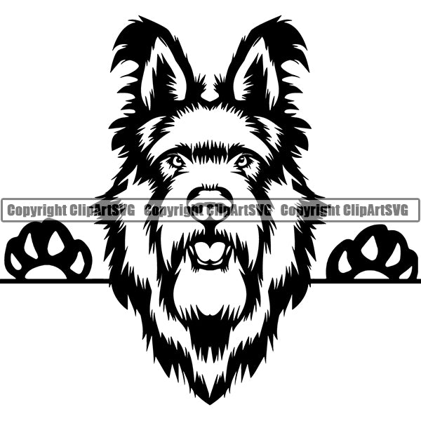 Berger Picard Peeking Dog Breed Clipart SVG