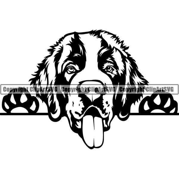 Saint Bernard Peeking Dog Breed ClipArt SVG 001