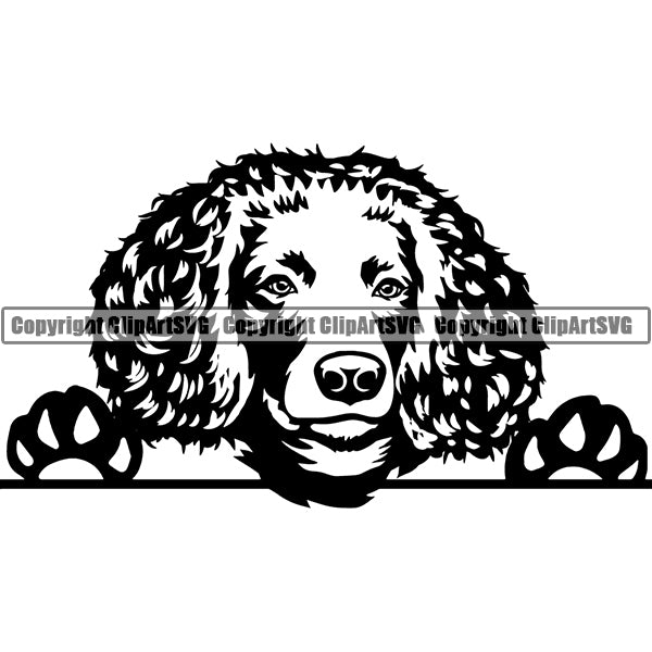 American Water Spaniel Peeking Dog Breed Clipart SVG