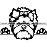 Yorkshire Terrier Peeking Dog Breed ClipArt SVG 010