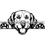 Golden Retriever Peeking Dog Breed ClipArt SVG 005