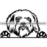 Maltese Peeking Dog Breed ClipArt SVG 004