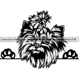Yorkshire Terrier Peeking Dog Breed ClipArt SVG 008