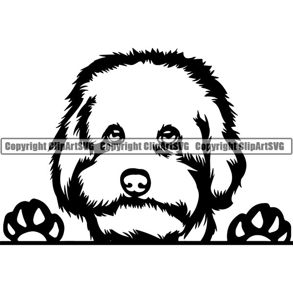 Maltipoo Peeking Dog Breed ClipArt SVG 002