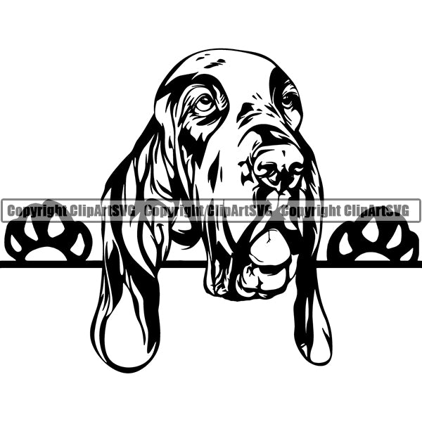 Bracco Italiano Peeking Dog Breed Clipart SVG
