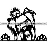 Yorkshire Terrier Peeking Dog Breed ClipArt SVG 004