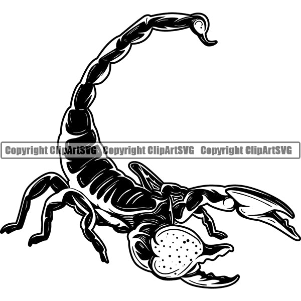 Scorpion Spider Insect Animal ClipArt SVG – ClipArt SVG