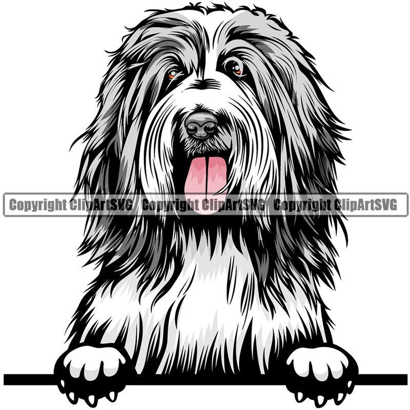 Bearded Collie Dog Breed Peeking Color ClipArt SVG