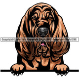 Bloodhound Dog Breed Peeking Color ClipArt SVG