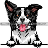 Border Collie Dog Breed Peeking Color ClipArt SVG