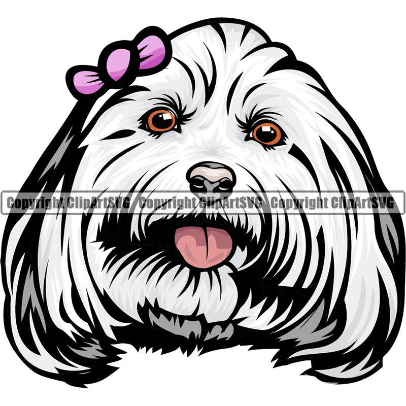 Maltese Dog Breed Head Color ClipArt SVG