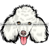 Poodle Dog Breed Head Color ClipArt SVG