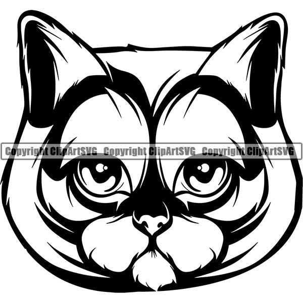 British Shorthair Head Face ClipArt SVG