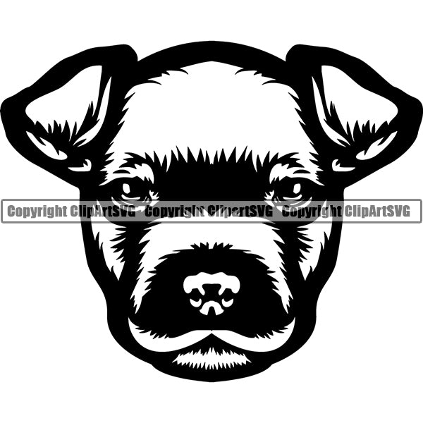 American Staffordshire Terrier Dog Breed Head Face ClipArt SVG