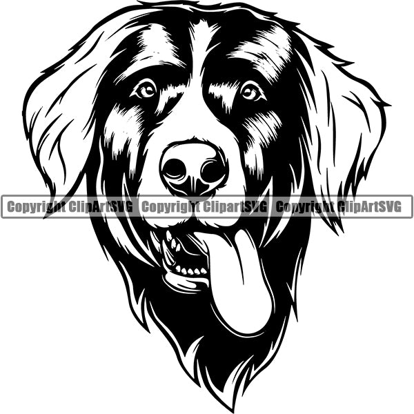 Bernese Mountain Dog Breed Head Face ClipArt SVG