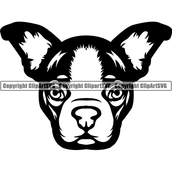 Boston Terrier Dog Breed Head Face ClipArt SVG