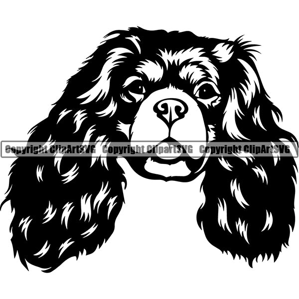 Cavalier King Charles Spaniel Dog Breed Head Face ClipArt SVG