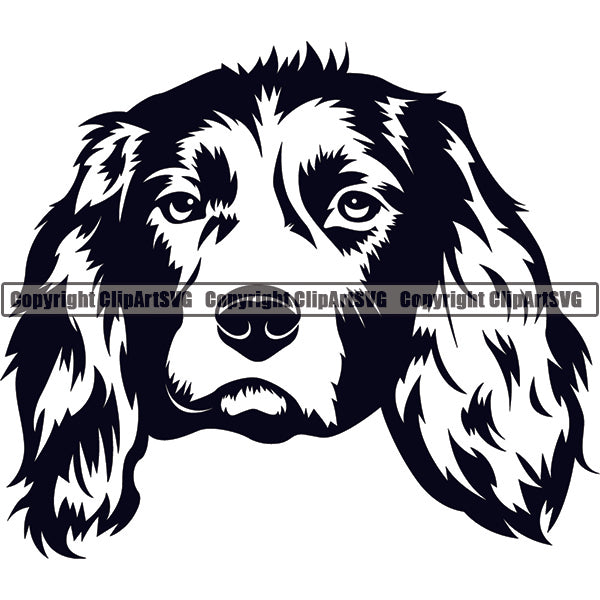 English Springer Spaniel Dog Breed Head Face ClipArt SVG
