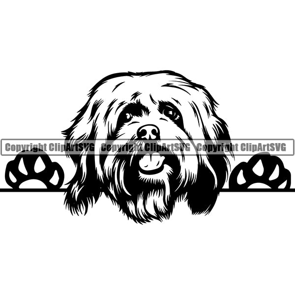 Havanese Peeking Dog Breed ClipArt SVG