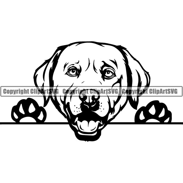 Labrador Retriever Peeking Dog Breed ClipArt SVG