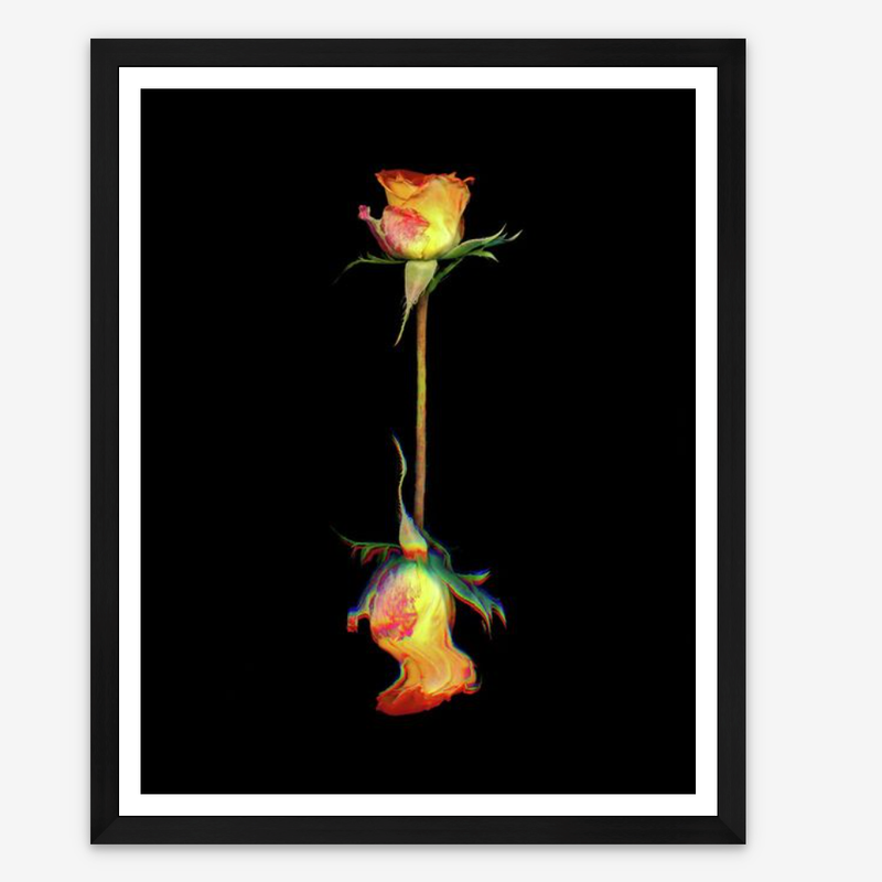 Large Flower Limited edition print