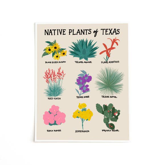 Native Plants of Texas Prints