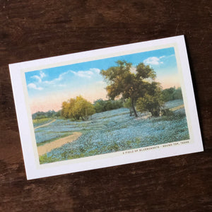 A Field of Bluebonnets - Round Top, Texas Postcard