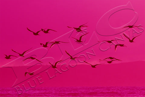 PINK Birds Canvas Print