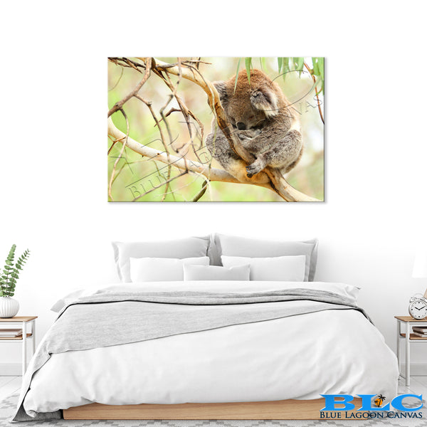 The Tranquil Koala Canvas Print