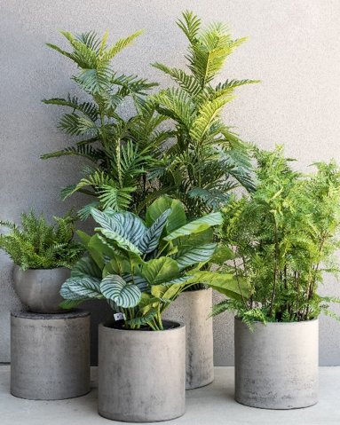 Decorated plants