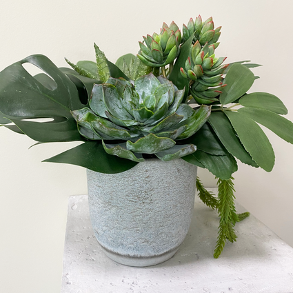 Mixed Succulents and Foliage Concrete Pot