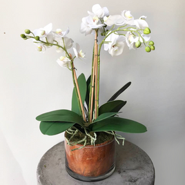 Lifelike Phalaenopsis Orchid Arrangement Small