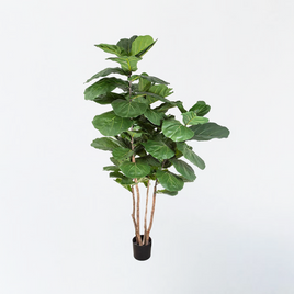 UV Protected Argyreia Nervosa Hanging Pot