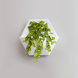 Syngonium Bush Honeycomb Planter