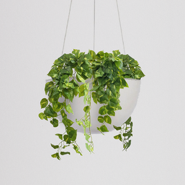 Pothos Hanging Bowl