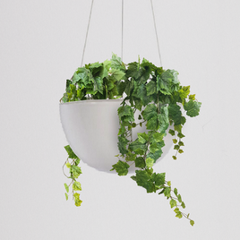 Grape Ivy Hanging Bowl