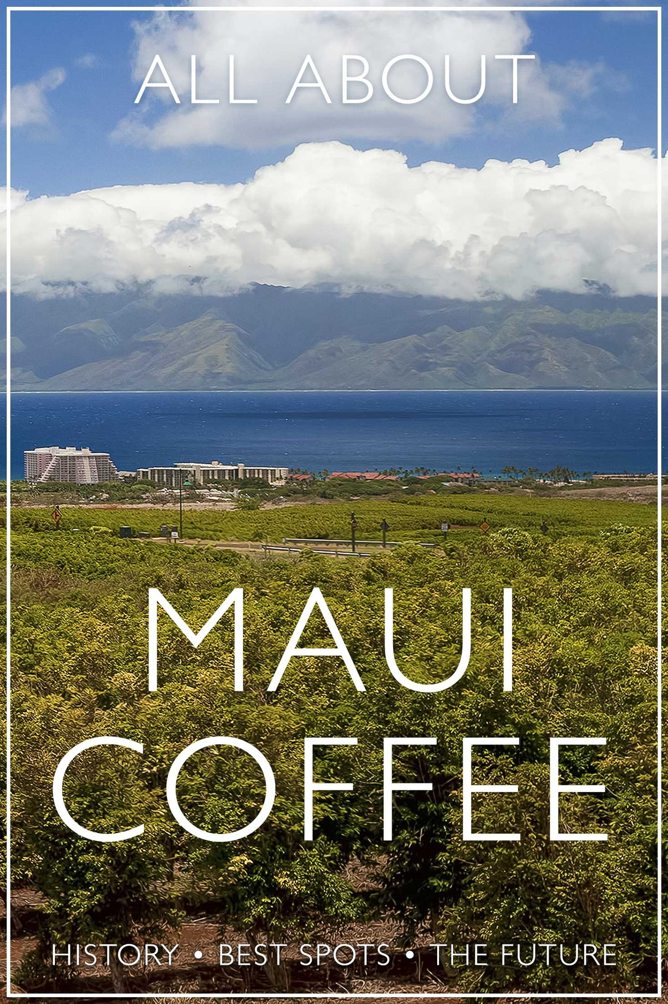 All About Maui Coffee