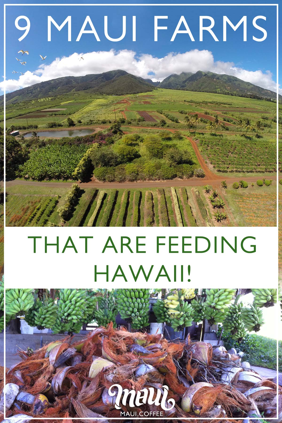 Maui Farms infographic