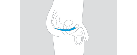Male pelvic floor anatomy diagram