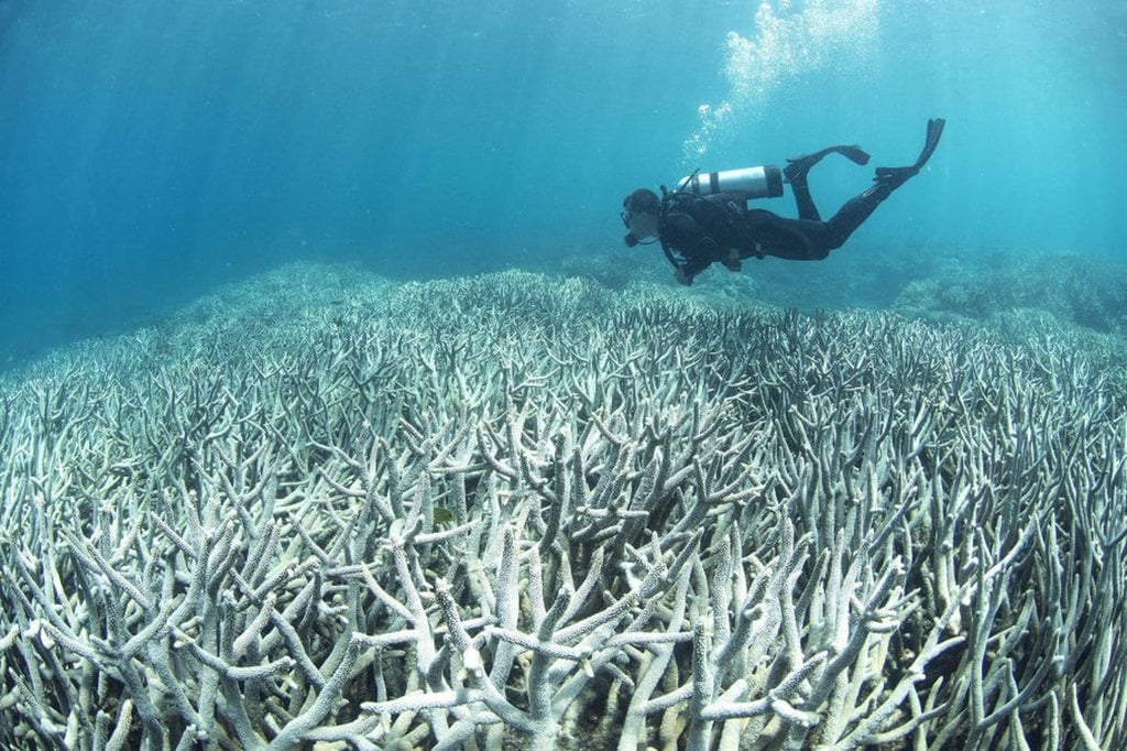 Scientists Are Breeding Super Coral That Can Survive Climate Change
