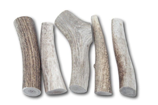 Top Dog Chews Premium Large Elk Antler Dog Treats, 5 count - Top Dog Chews
