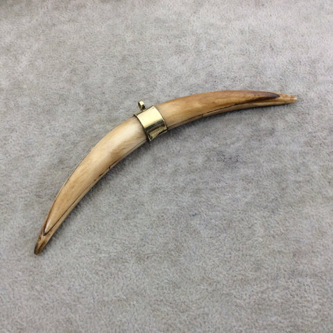 "5"" Light Brown Long Skinny Banana Tusk Shaped Natural Ox Bone Pendant with Plain Gold Plated Bail - Measuring 12 x 133mm - (TR117-LB)"