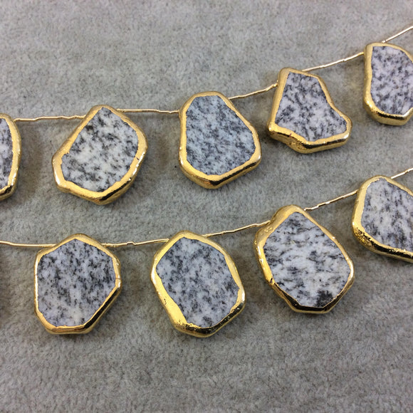 Gold Electroplated Smooth Freeform Slab Shaped Natural Speckle Feldspar Top-Drilled Beads - 9.5