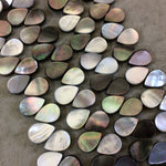 "Smooth Flat Teardrop Shaped Iridescent Black Lip Shell Beads - 15"" Strand (Approx. 57 Beads) - Measuring 10mm x 14mm - Natural Shell Beads"