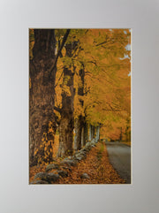 Back Roads Print - piper-and-dune - Home Goods