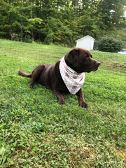 Wilbur's Favorite Pet Bandanas - 6 Styles - piper-and-dune - Pet